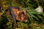 With the support of WCS Madidi National Park is declared as an Area of ​​Importance for the Conservation of Bats (AICOM)